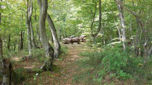 Участок в Ольгинке. Реликтовый лес.